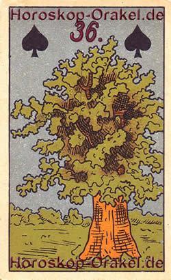 Der Baum - Der Baum der Erkenntnis